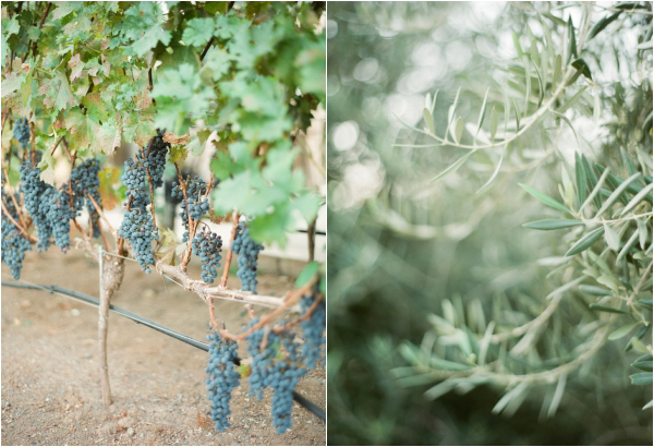 brasswood-winery-wedding-lindsay-madden-photography-2
